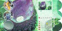 diary-sea-p06