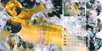 diary-sea-p15